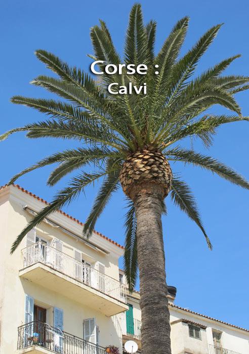 [Image: corse1.jpg]